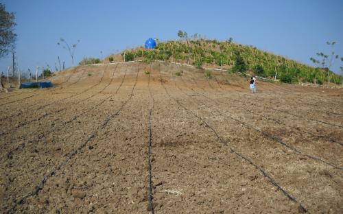 Panama - Drip Irrigation Installation